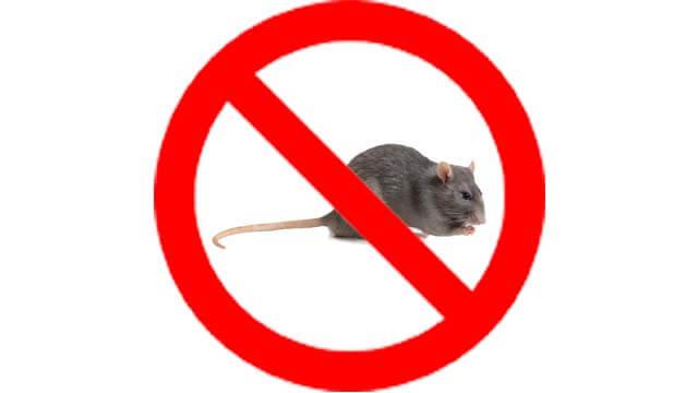 dịch vụ diệt chuột da nen img