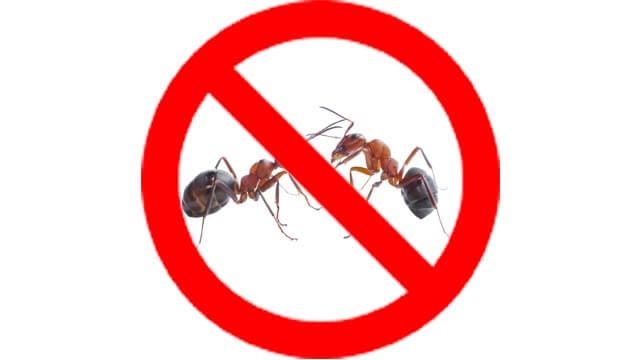 dịch vụ diệt kiến img da nen