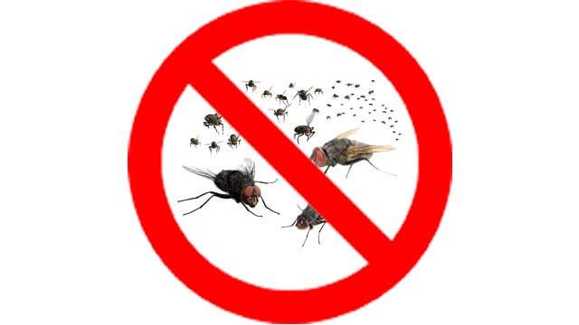 dịch vụ diệt ruồi img nen r