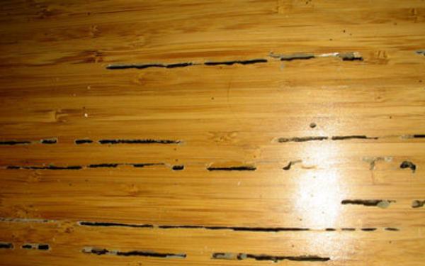con mối gỗ