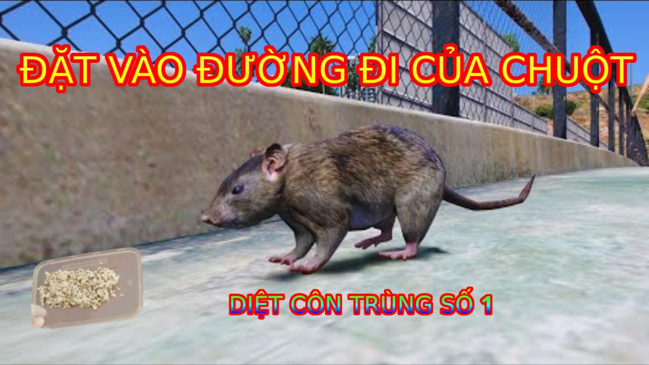 cách diệt chuột bằng xi măng